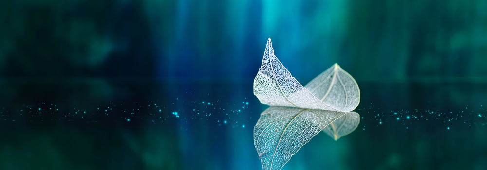 A transparent white leaf is reflected on blue green water.